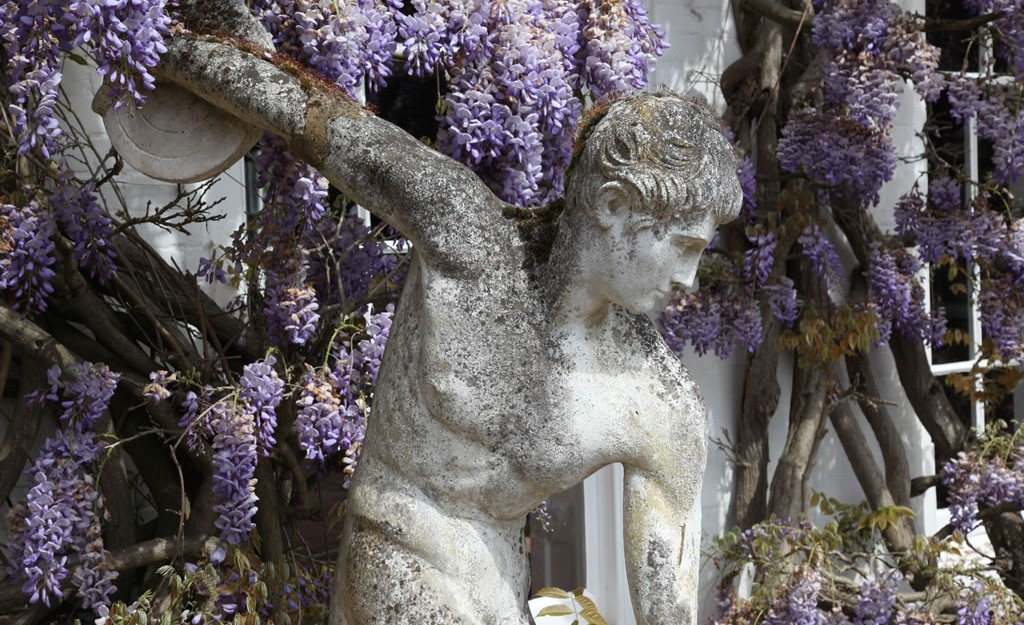 statue in front of wysteria